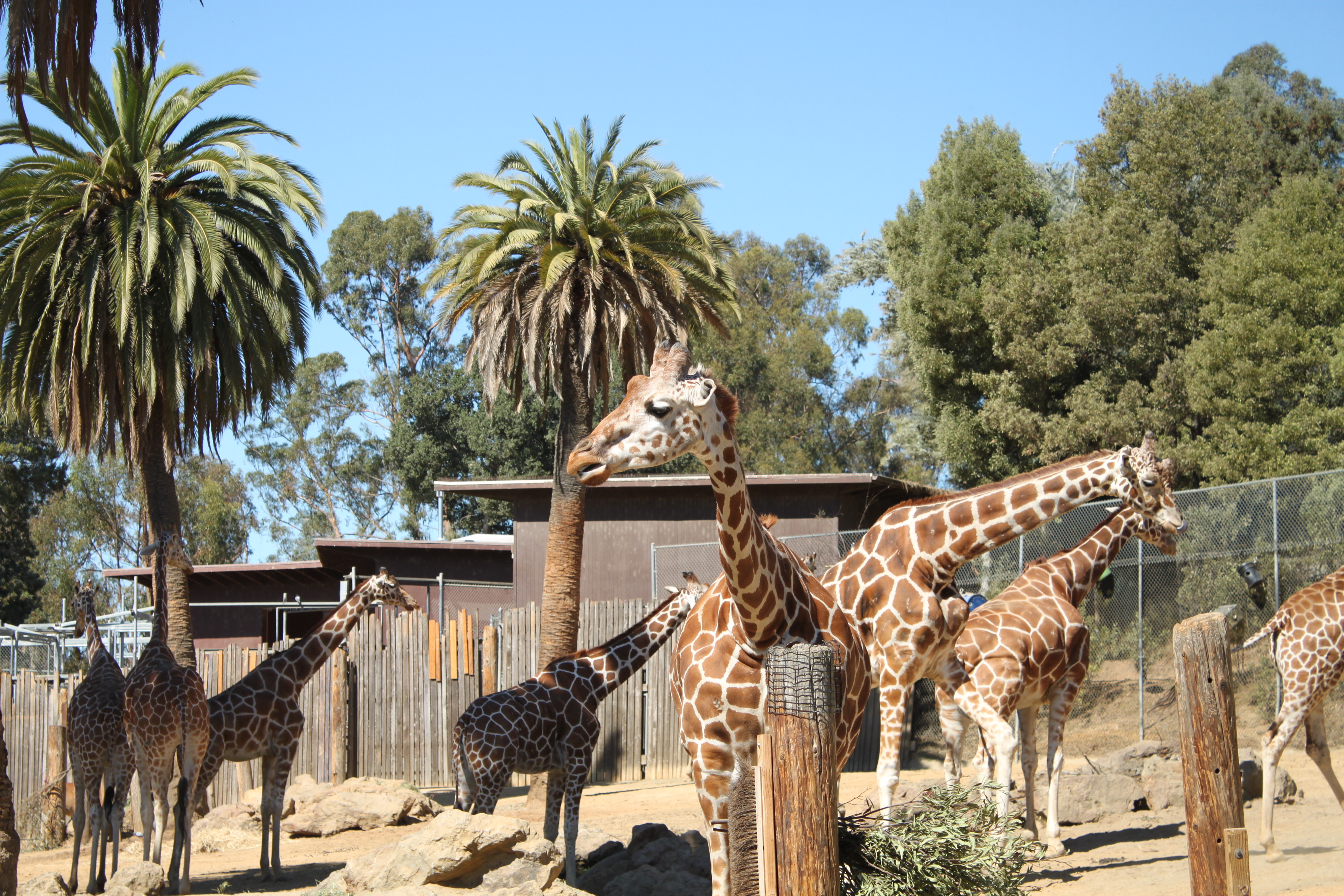 oakland zoos newest addition - HD 3456×2304